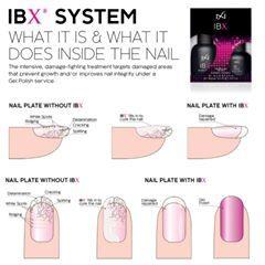 IBX 2